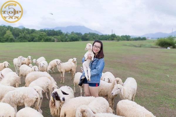 Nên đi đâu khi tới Vũng Tàu? Cánh đồng cừu suối nghệ - Địa điểm du lịch Vũng Tàu